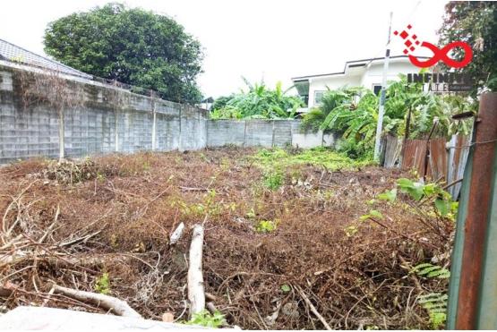 81353, ที่ดิน 59ตารางวา ซอยกรุงเทพ- นนทบุรี 3 ติดรถไฟฟ้าMRT เตาปูน